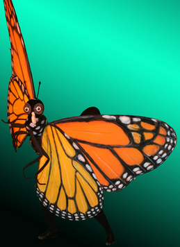 Thumbnail image for Butterfly.jpg