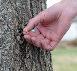 Burken-tree-sampling-port-web.jpg