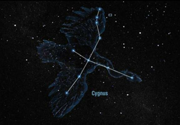 Visitors' Night at the S&T Observatory to feature viewing of Cygnus