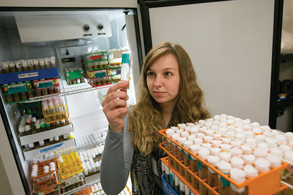 Courtney Fiebelman, a graduate student in applied and environmental biology, studies fruit flies in a Schrenk Hall laboratory.