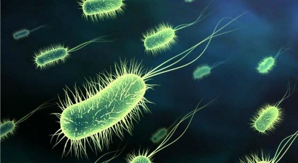 Image of bacteria via Telezones.com.