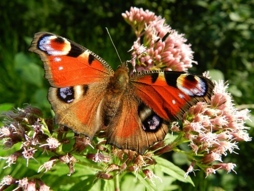 butterfly-176156_960_720