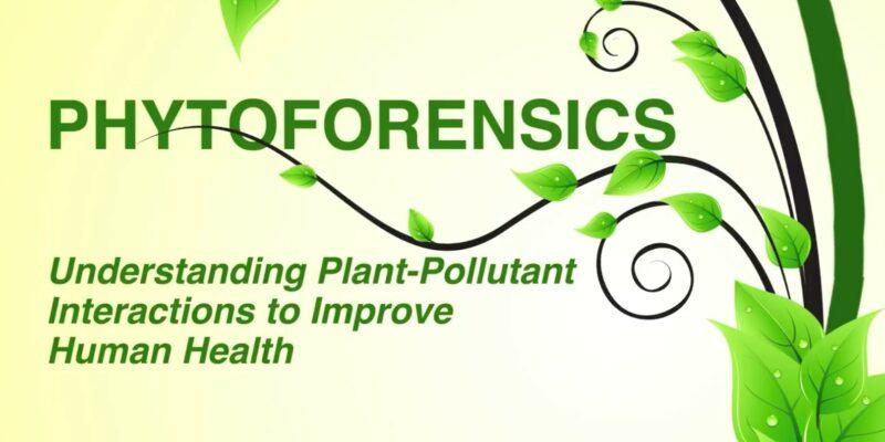 "Plant detective: Missouri S&T professor studies plants as ""bio-sentinels"" of indoor pollution"